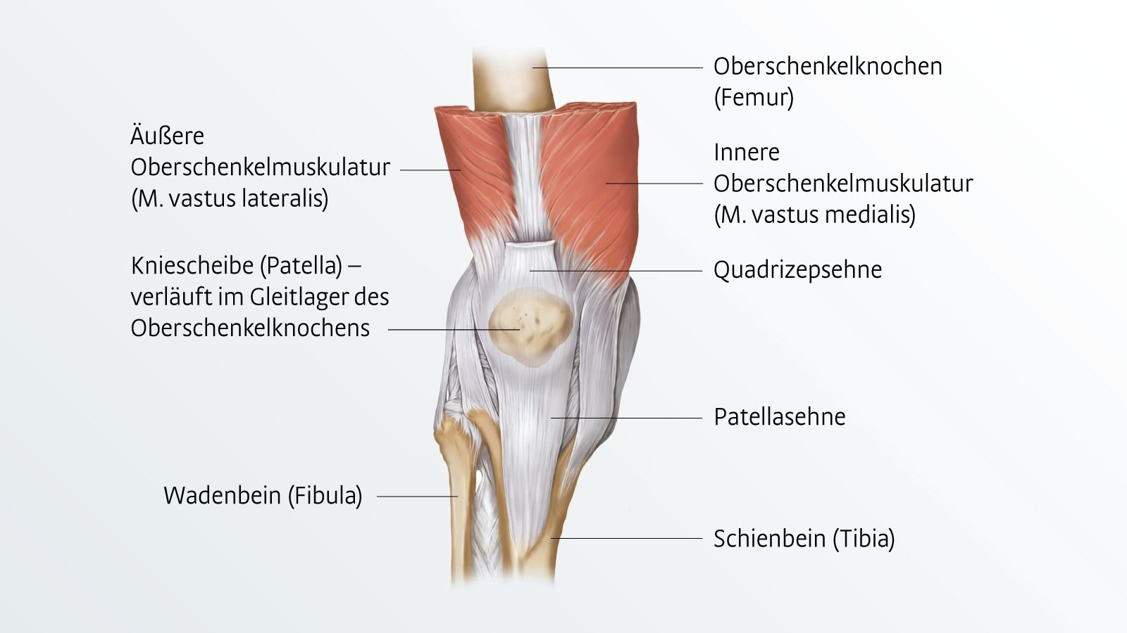 Patellaspitzensyndrom: Diagnose & Therapie | medi